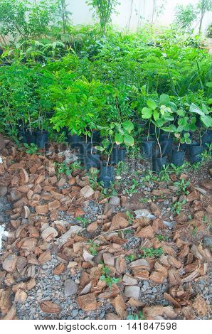 Planting : young plant in jiffy pots