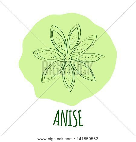 Hand drawn green anise branch with leaves isolated on a soft green background. Cooking ingredient for design. Spicy herbs seasoning. Vector illustration