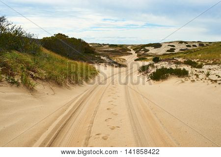 Road in sand dunes at Cape Cod, Massachusetts, USA.
