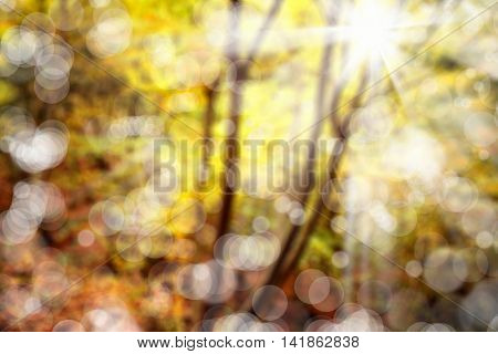 background image of blurry forest in autumn