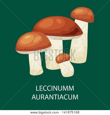 Mushroom leccinum aurantiacum, Vector isolated edible natural mushrooms in nature organic vegetable food.
