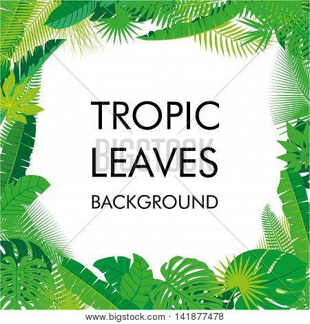 Tropical Leaves background, isolate vector. Abstract Illustration with differrent Tropical foliage with place for your text.. Vector illustration. Eps 10.