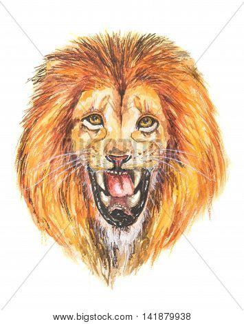 Watercolor lion roar. Big fierce lion roaring. Hand drawing illustartion.