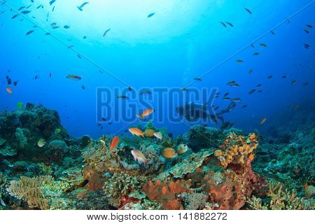 Scuba dive. Coral Reef. Underwater. Sea Ocean