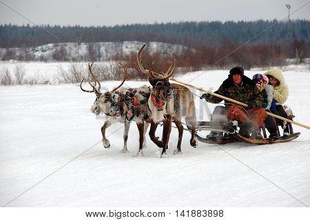 REVDA, RUSSIA - MARCH, 2012: North Holiday - reindeer herder rolls tourists on reindeer sleigh