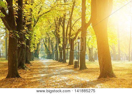 Sunny park in autumn