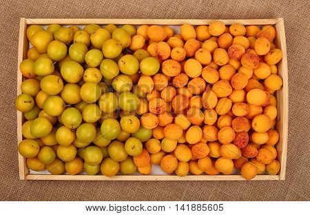 Tray Of Yellow Plums And Apricots On Canvas