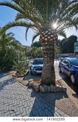 PALMA DE MALLORCA BALEARIC ISLANDS SPAIN - APRIL 2 2016: Parked cars and palm trees along the Paseo Maritimo in Palma de Mallorca Balearic islands Spain on April 2 2016.