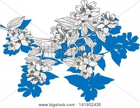 illustration with jasmine flower branch isolated on white background