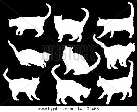 illustration with cat silhouettes collection isolated on black background