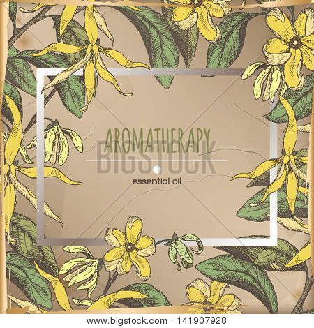 Vintage color frame template with ylang-ylang sketch placed on old paper background. Aromatherapy series. Great for traditional medicine, perfume design, cooking or gardening.