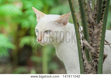 close up White cat in the garden.