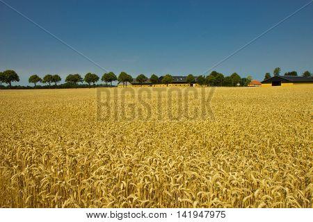 Beautiful fields and meadows of Jutland, Denmark