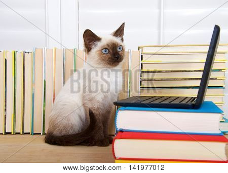 Siamese kitten with blue eyes sitting at a miniature laptop computer stacked on books with books in background. Looking off to viewers right as if thinking. Copy space. fun technology learning concept