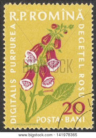 MOSCOW RUSSIA - CIRCA MAY 2016: a post stamp printed in ROMANIA shows a Digitalis purpurea plant the series