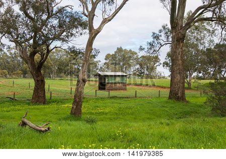 Farmland rural scene with small outbuildings in the pasture, tall trees, green grass and yellow wildflowers under a blue sky with clouds in the Swan Valley in Western Australia.