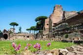 the ruins of the Stadium in the Domitian Imperial palace on the Palatine Hill in Rome Italy poster