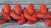 Steamed Lobsters - 4 new England Lobsters in a row  with claws crisscrossed. (Ready for feasting!) poster