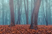 Foggy autumn gothic landscape - autumn bare trees in the deserted autumn park in dense fog. Mysterious autumn view of autumn park in somber autumn weather poster