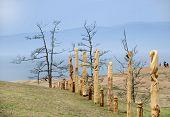 Wooden shaman totems at Burhan Cape, Baikal Lake, Russian Federation poster