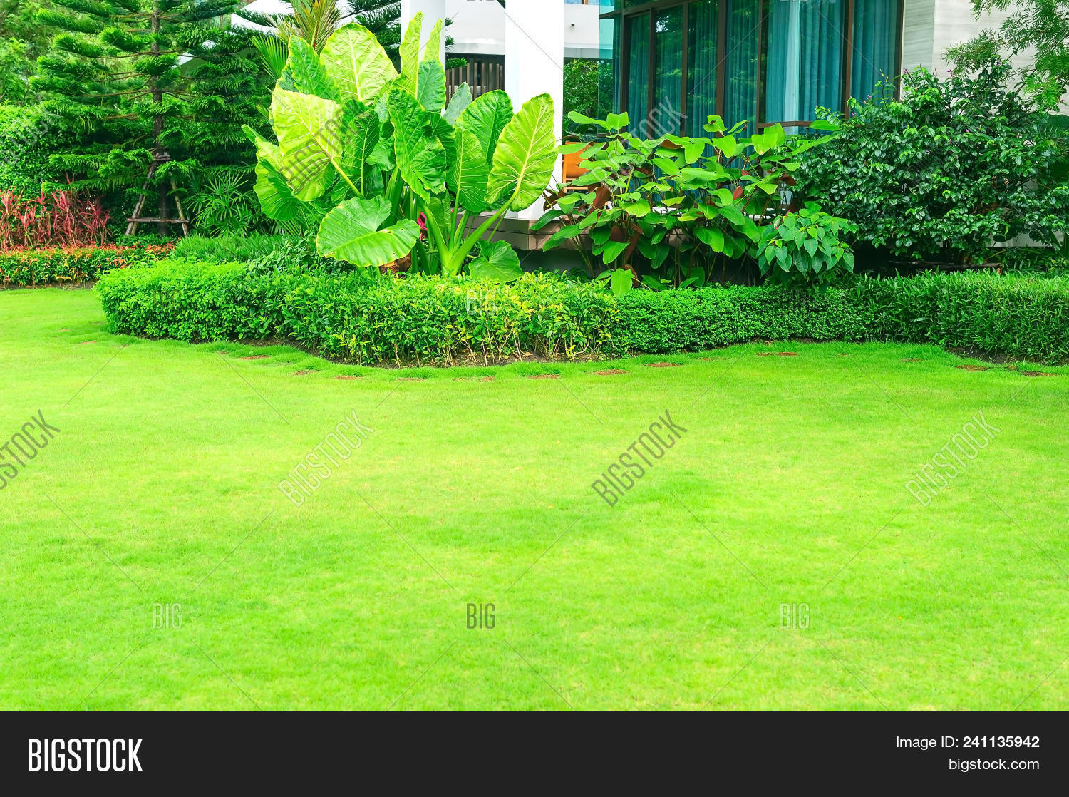 Green Lawn Front Lawn Image Photo Free Trial Bigstock