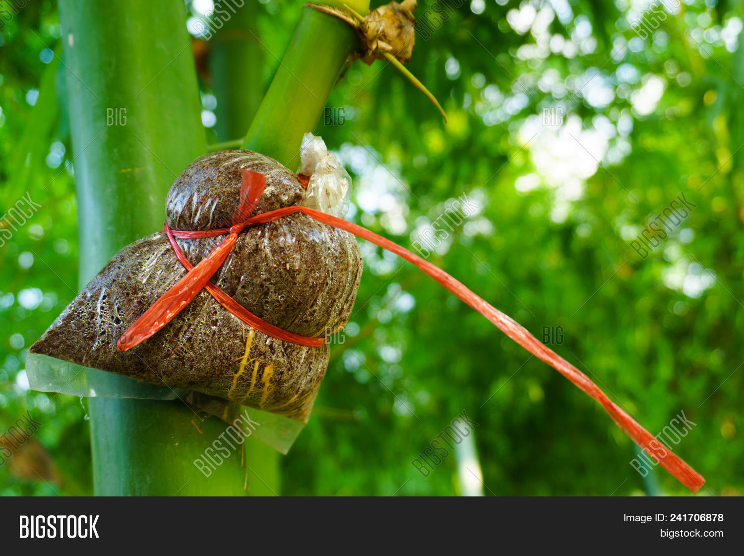 Bamboo Species Image Photo Free Trial Bigstock