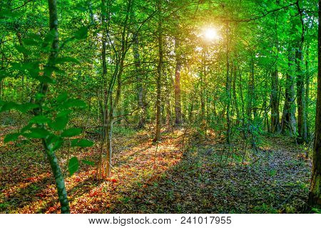 A beautiful lush green forest with a golden sun shining through the trees onto a leafy ground.