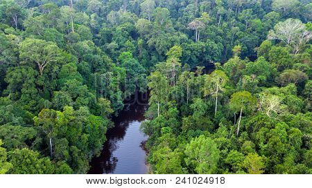 Aerial view of the Taman Negara tropical rainforest in Malaysia