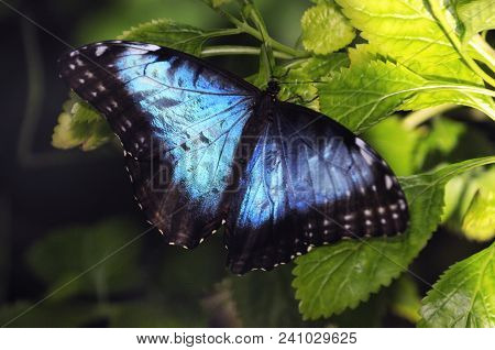 Touched: Blue Butterfly Sitting On Plant, Florida