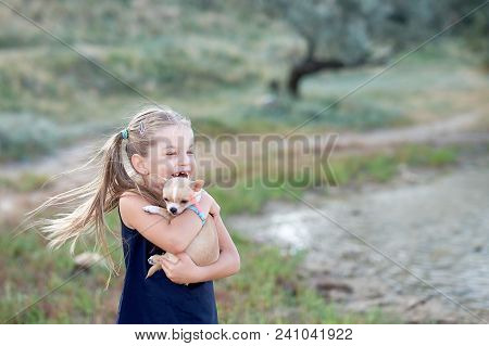 Girl Hug A Little Puppy Dog Gray Hairy Chihuahua Doggy
