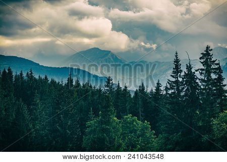 Inspiring Mountains Landscape Panorama, Beautiful Day In Summer Tatras, Flowers And Mountain Ridge O