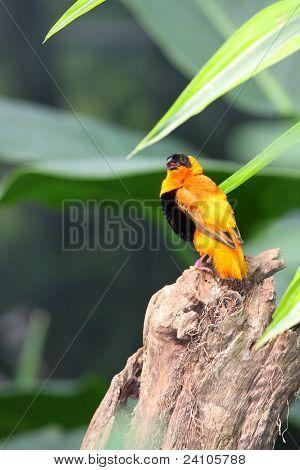Beautiful Orange And Black Bird