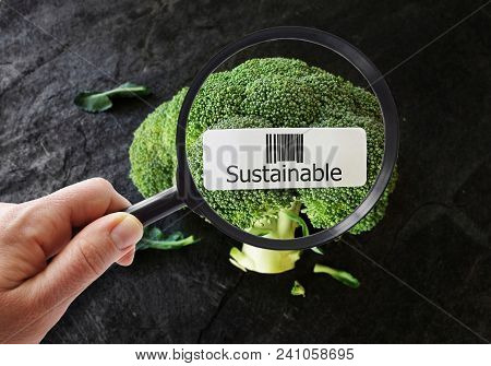 Person With A Magnifying Glass Looking At Broccoli With Sustainable Upc Label