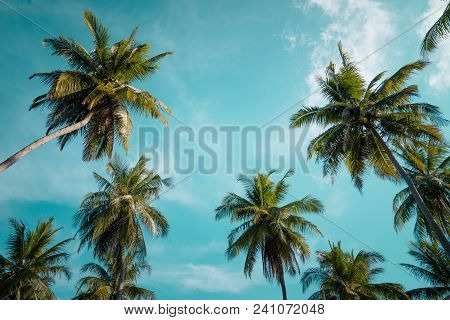 Palm Trees Against Blue Sky, Palm Trees At Tropical Coast, Vintage Toned And Stylized, Coconut Tree,