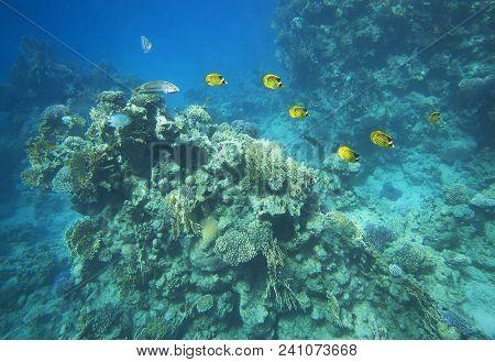 World Of Marine Underwater World, Fish, Corals