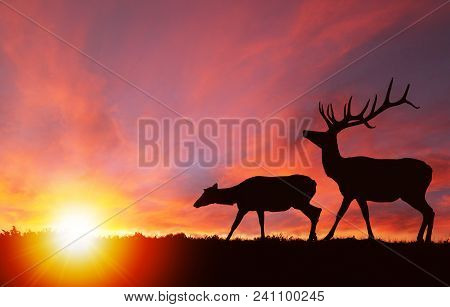 Silhouette Of A Red Deer Bull Elk And A Female Elk Cow With Dramatic Sunset In The Background.