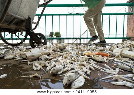 Pile Of Dead Fish Laying On Ground Collected From Polluted Water