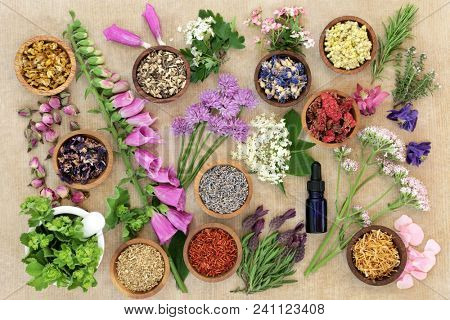 Herbs and flowers used in herbal medicine and natural homoeopathic remedies with aromatherapy essential oil bottle and mortar with pestle on rough brown paper background.