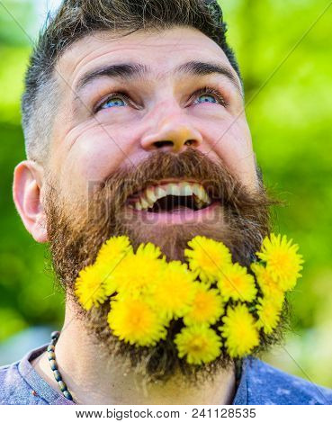 Barber Concept. Bearded Man With Dandelion Flowers In Beard, Close Up. Man With Beard And Mustache O