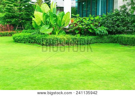 Green Lawn, The Front Lawn For Background, Garden Landscape Design With Modern House