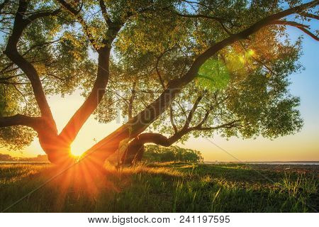 Majestic Vivid Sunset Through Trunk Of Tree At Beautiful Nature. Perfect Sun Rays On Horizon Lights