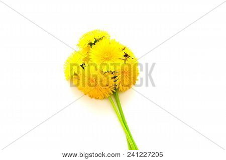 Dandelions Yellow Spring Flowers Bouquet On White Background