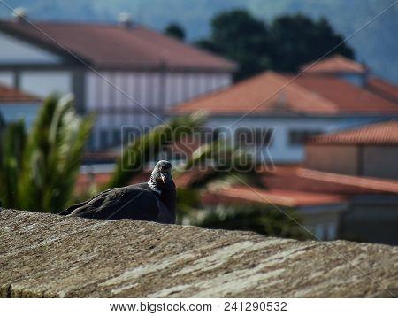 Dove In The Watchtower Of San Juan