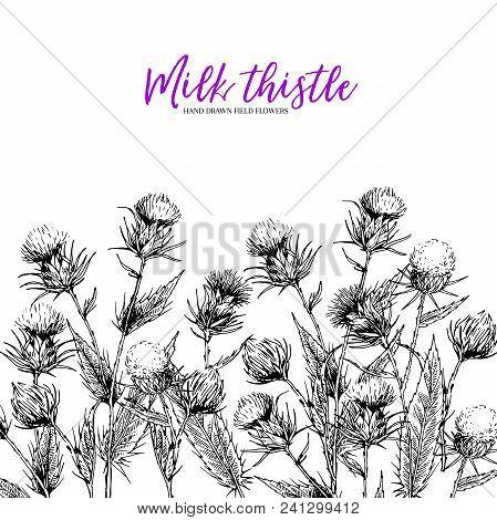 Hand Drawn Wild Flowers. Milk Marian Thisthle Flower. Medical Herb. Vintage Engraved Art. Border Com