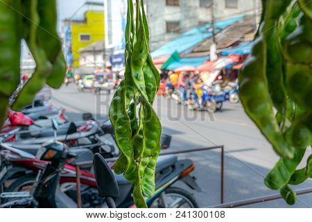 The Fresh Parkia Is Tropical Stinking Edible Beans, Thai Style Tropical Fruit, In Southern Thailand