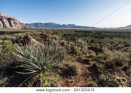 Cholla cactus and Yuccas in Red Rock Canyon National Conservation Area near Las Vegas Nevada.