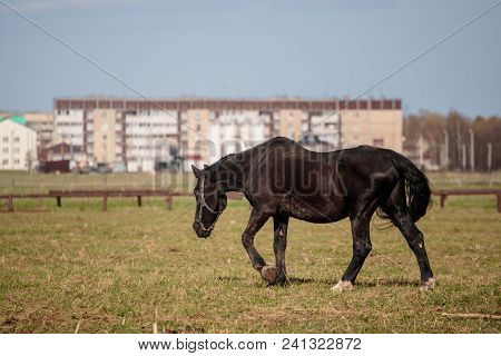 Horse For A Walk In The Daytime.