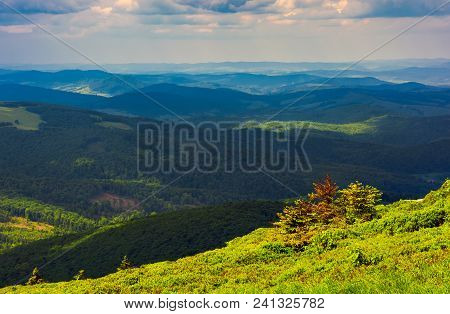 Forested Rolling Hill On A Cloudy Day. Lovely Nature Scenery Of Mountainous Countryside. Gorgeous We