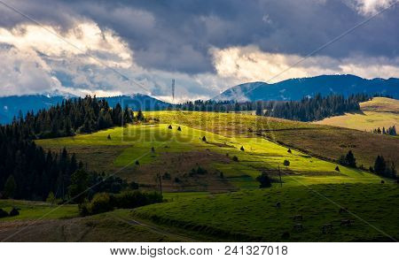 Mountainous Rural Area On A Cloudy Day. Gorgeous Light On Rolling Hills With Haystacks And Spruce Fo