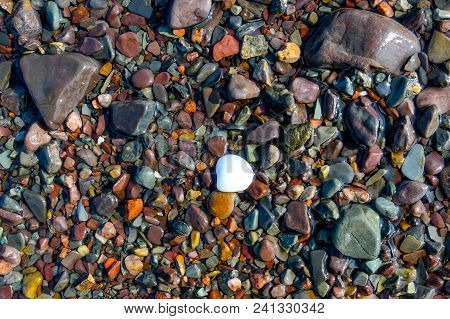 A White Seashell And Rocks Worn Smooth By The Tides At The Edge Of The Bay Of Fundy, Canada.